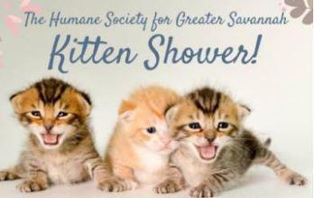 kitten shower