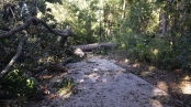bike-path-2